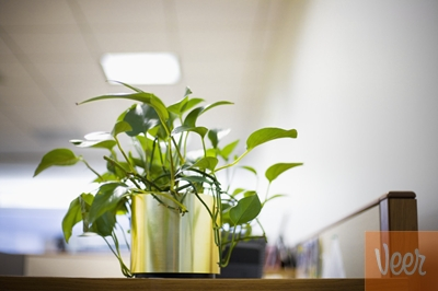 Officeplant